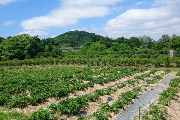 「森の中の果樹園」に刮目せよ! 弘前のおすすめスポット