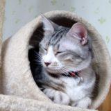 かわいい猫に癒されたいなら!弘前の猫カフェ「Five Cats」