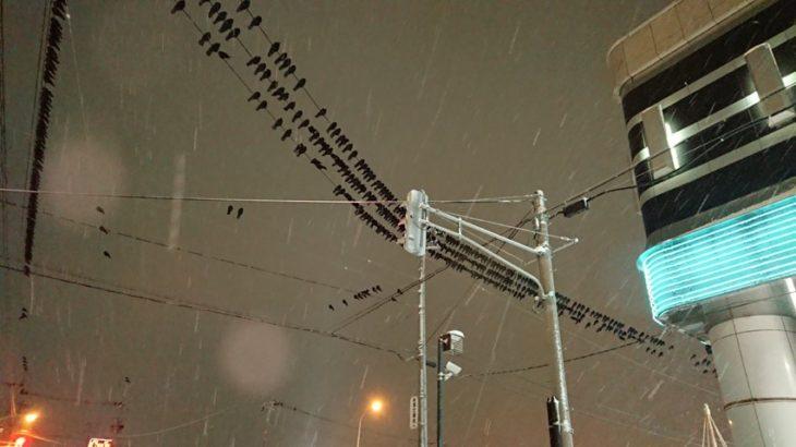 電線に止まるたくさんのカラス
